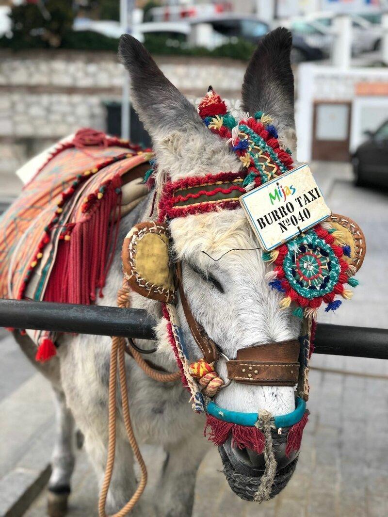 Испанских осликов спасут от толстых туристов