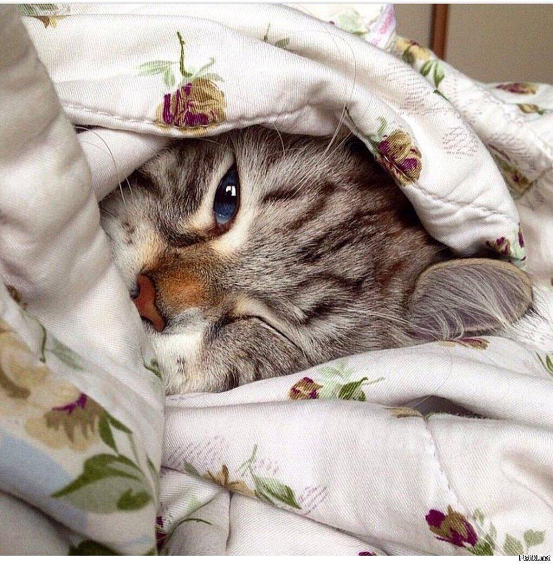 Кошки утро фото