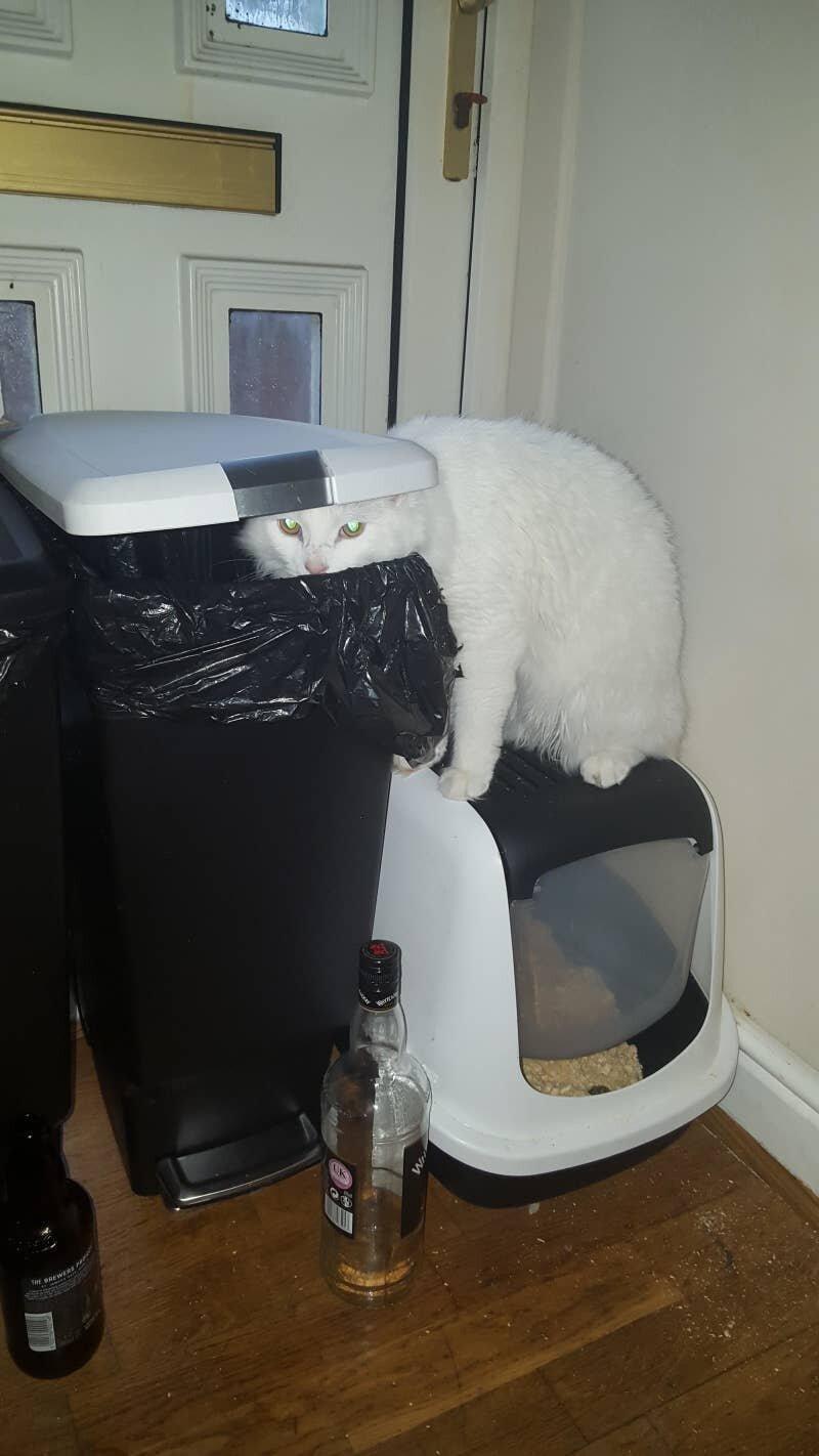 Кот, у которого выдалась тяжелая ночь