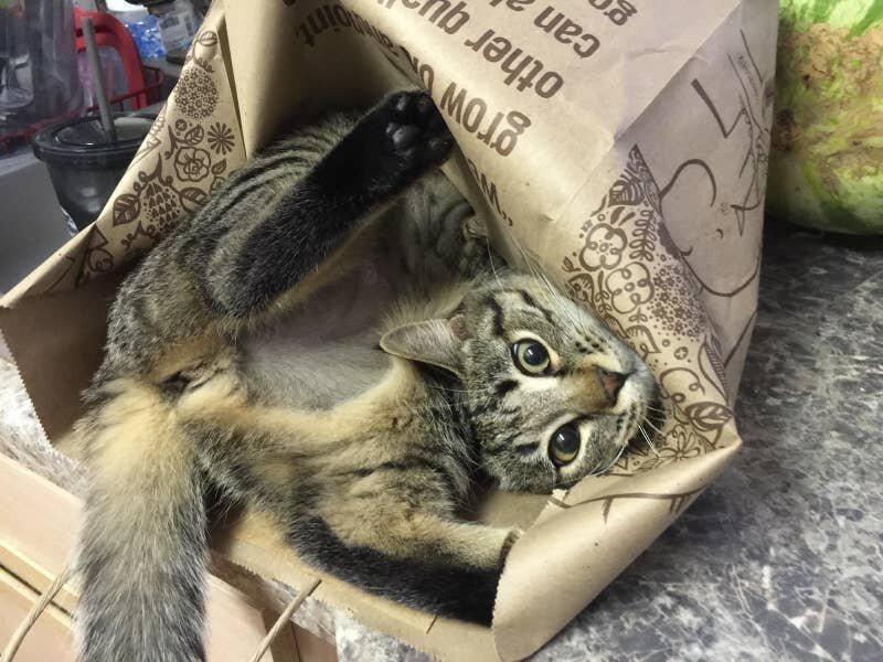 Неправильно собранный кот