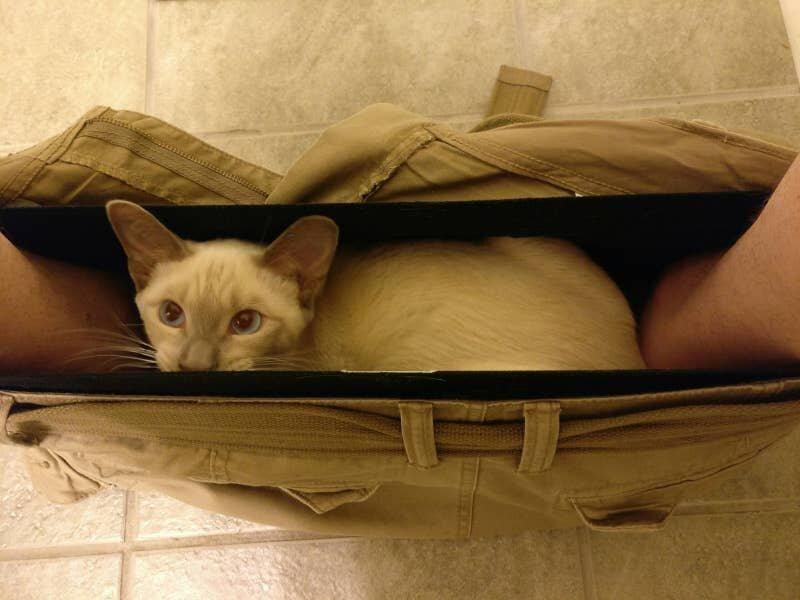 Кот нашел идеальное убежище