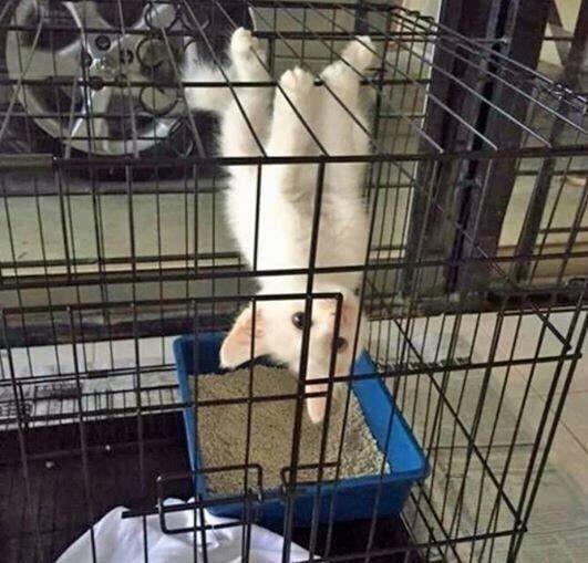 Эволюционирующий кот