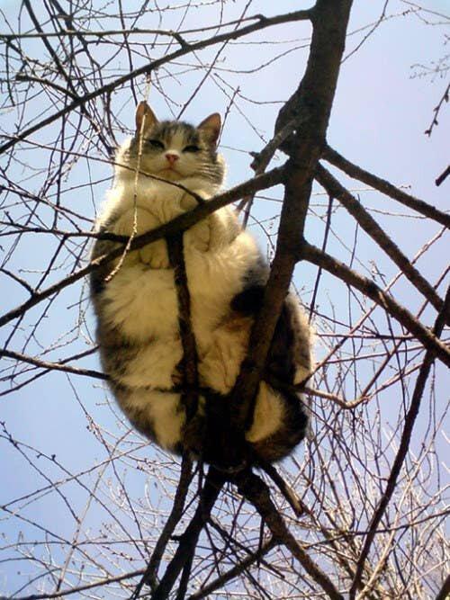 Кот, оспоривший закон всемирного тяготения