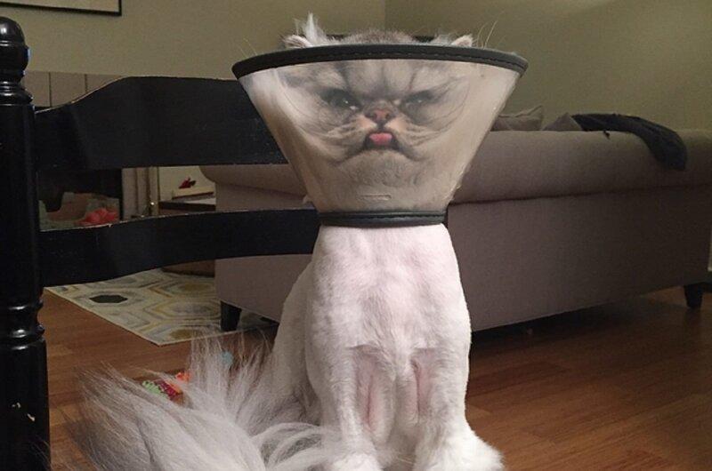 Коты, которые нас удивили