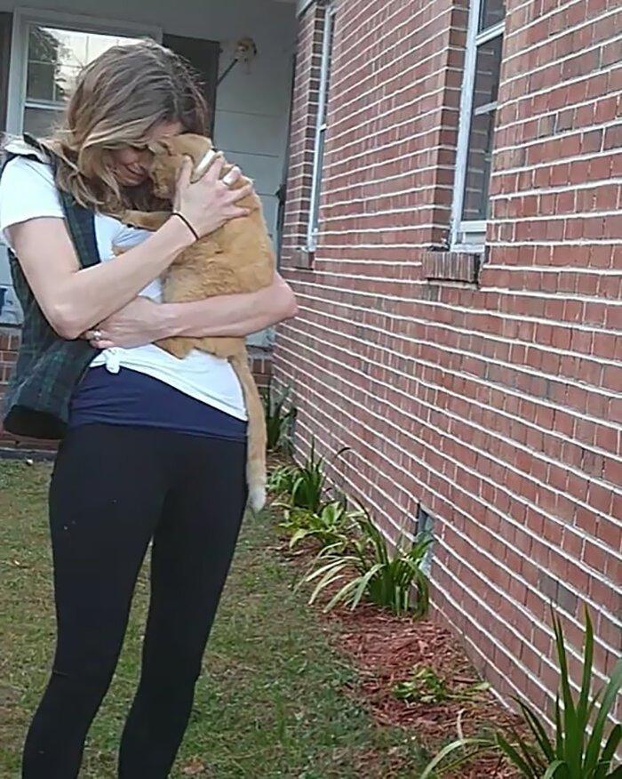 Этот кот по кличке Кэт пропал без вести на 536 дней.