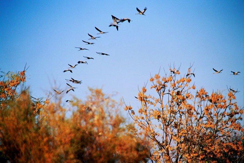 пообщался картинки птицы улетели фотографию делаю автоматическим