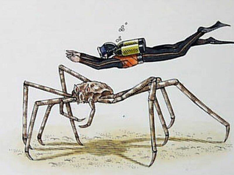 Человек и японский краб-паук