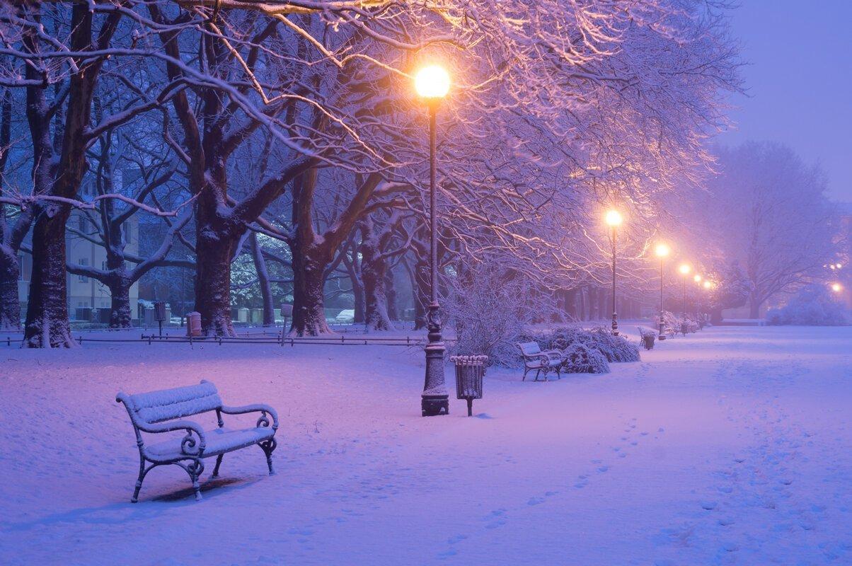 картинки зимний парк немного