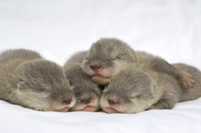 Маленькие каланчики - просто очаровашки!