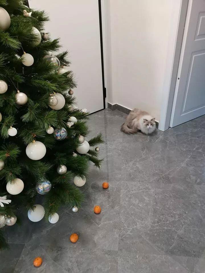 Каждый год, моя кошка с разбегу залезала на ёлку. Но я узнал, что она боится мандаринов, и вот - круговая оборона!
