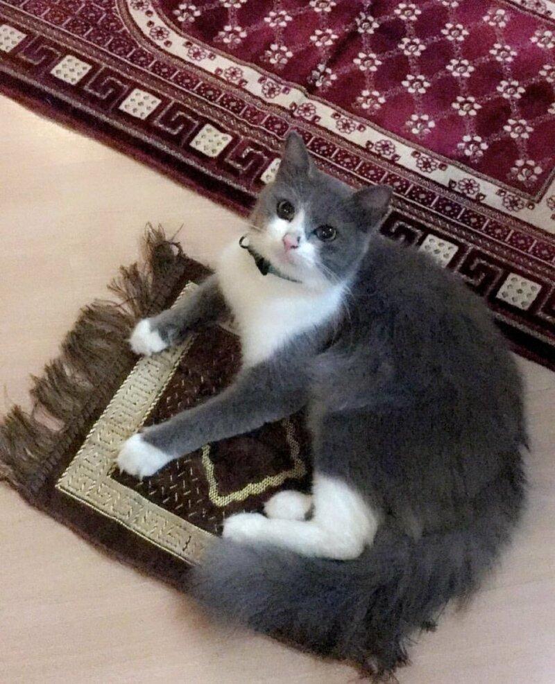 Пришлось купить ей персональный коврик.