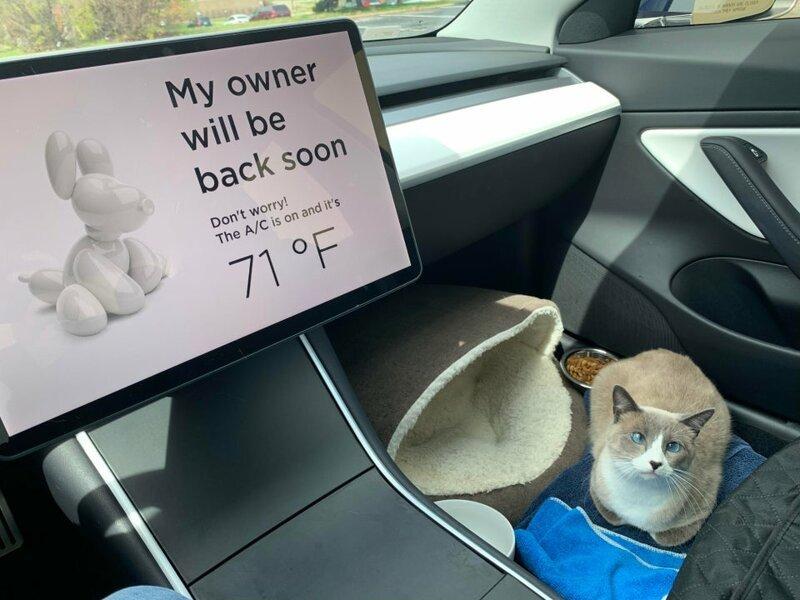 А ваш кот любит путешествовать?