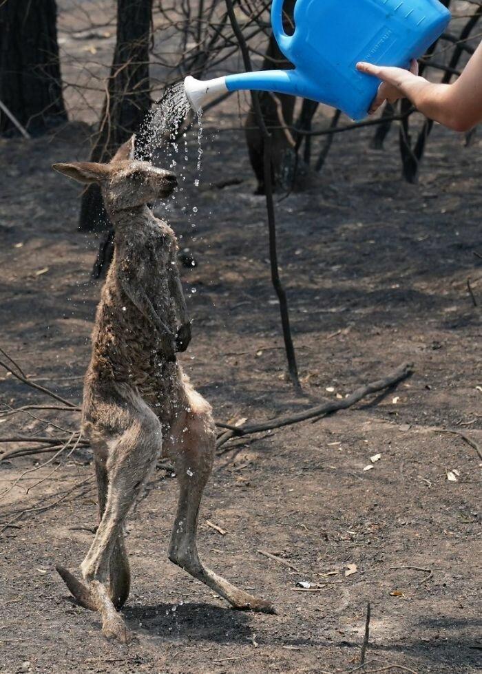 Люди стараются помогать животным
