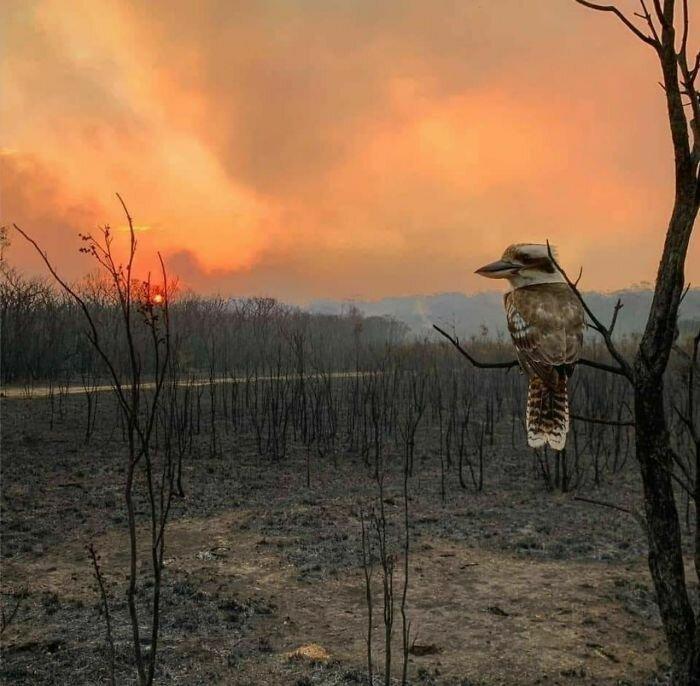 Что остается после пожара