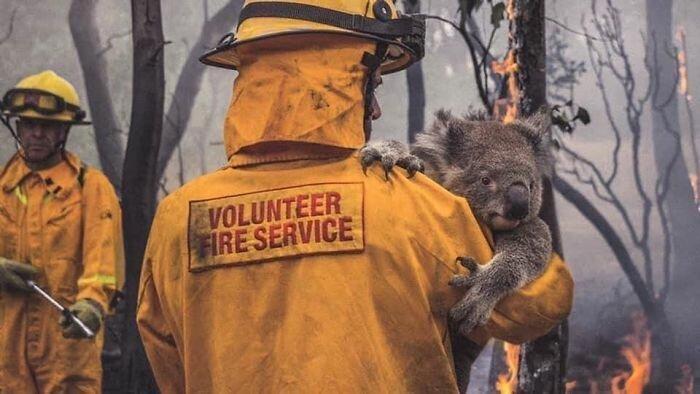 Люди спасают животных всегда, когда могут это сделать
