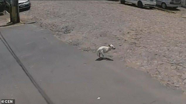 Видео: хозяйка покалеченной собаки решила от нее избавиться