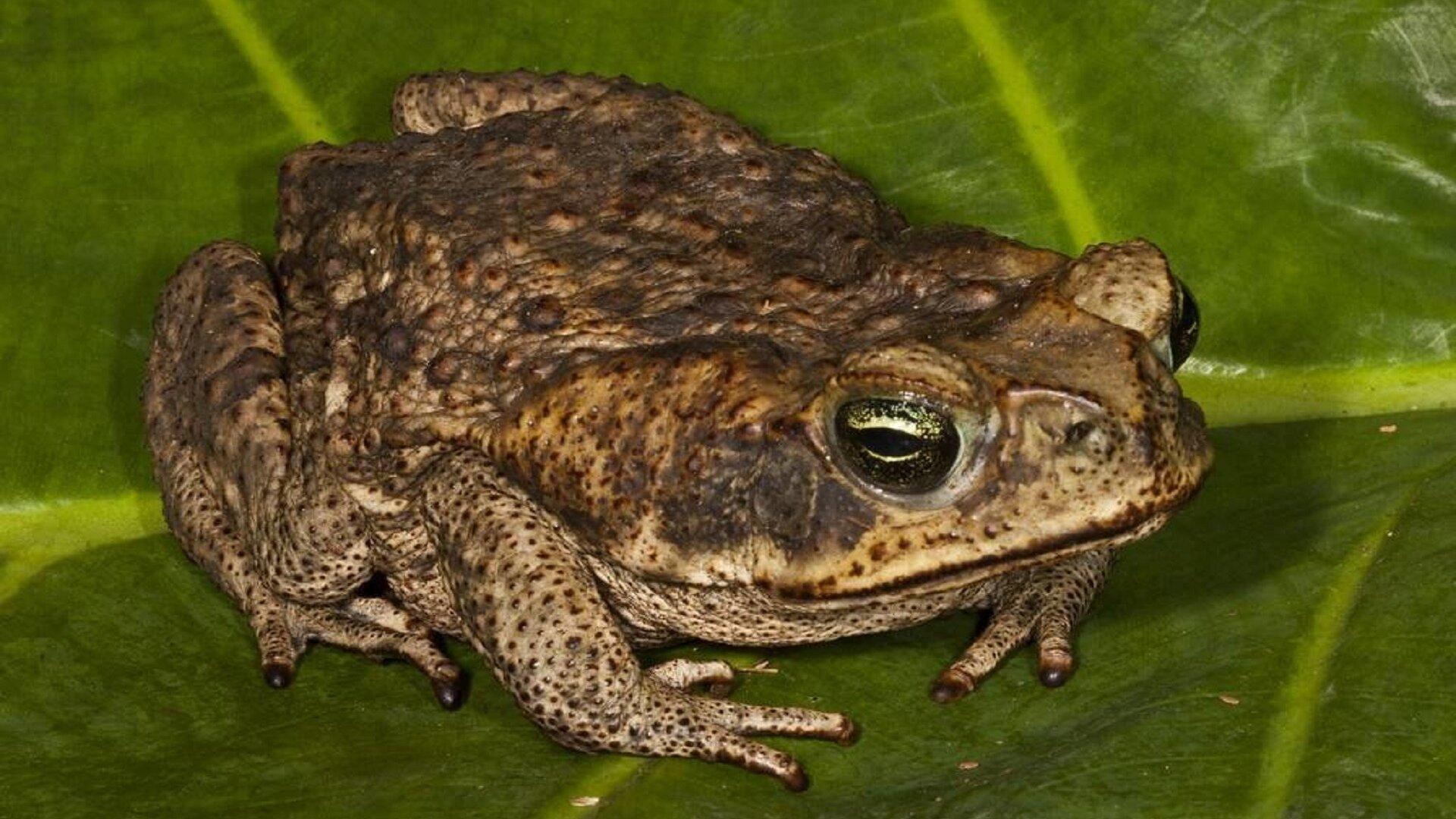 Картинка жаба старая