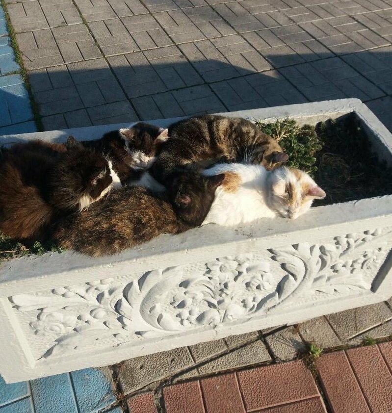 Когда на клумбе выросли котики