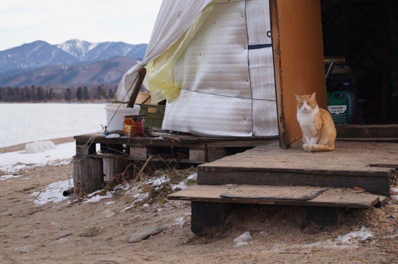 Байкальский кот
