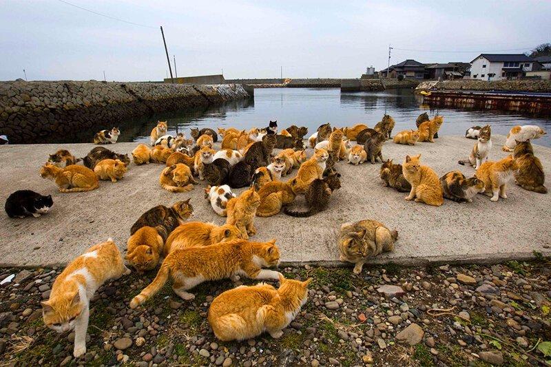 Настоящий рай для любителей кошек