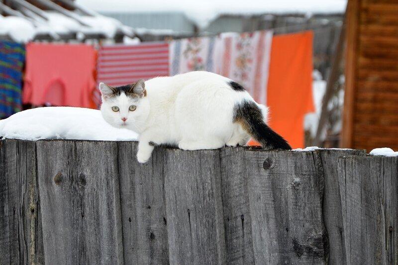 Был бы забор, а котик найдётся!
