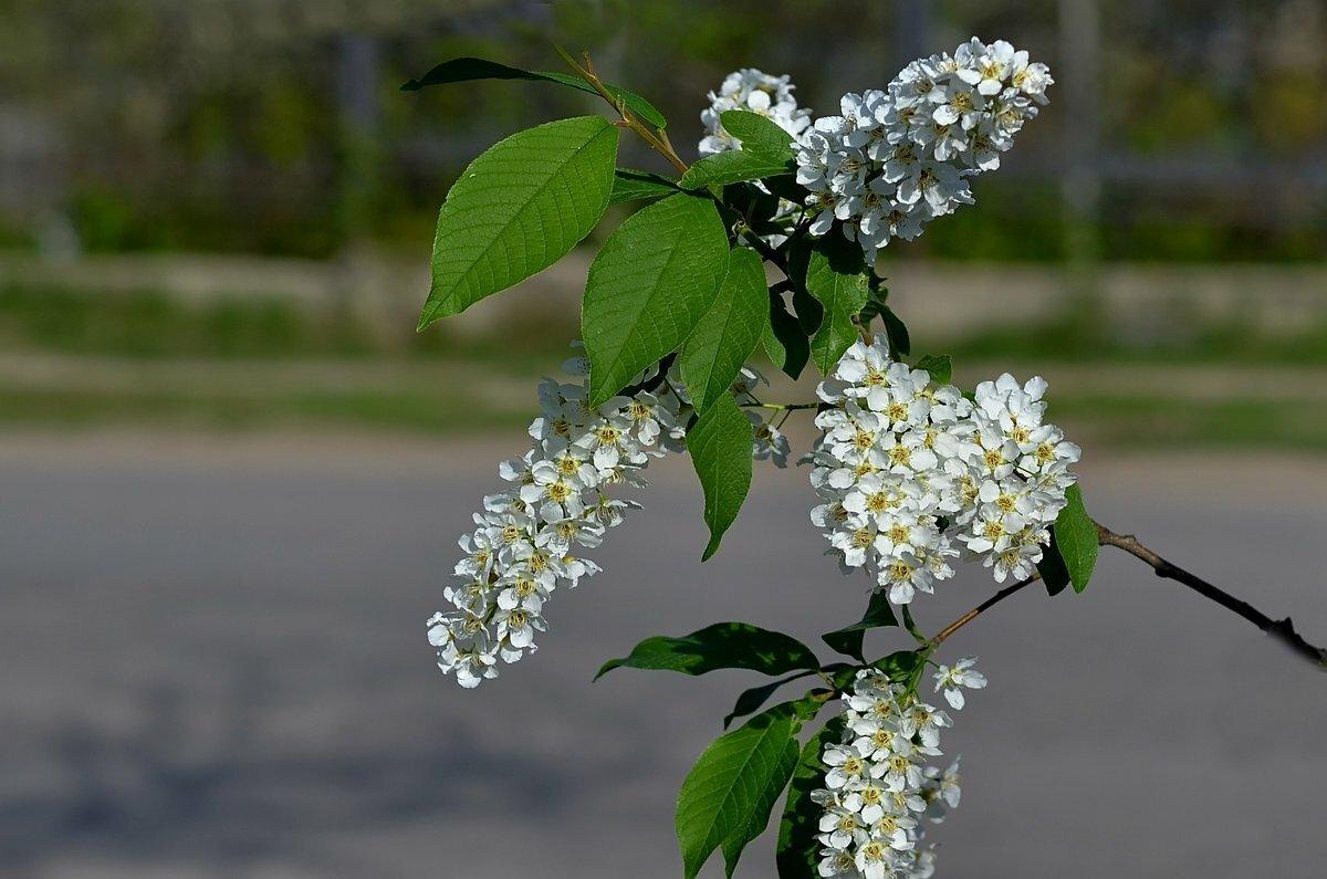 Цветущий сад фото высокого разрешения юбочки подчеркнут