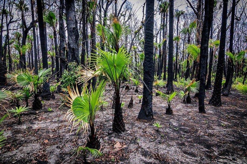 Природа Австралии начала оживать после пожаров