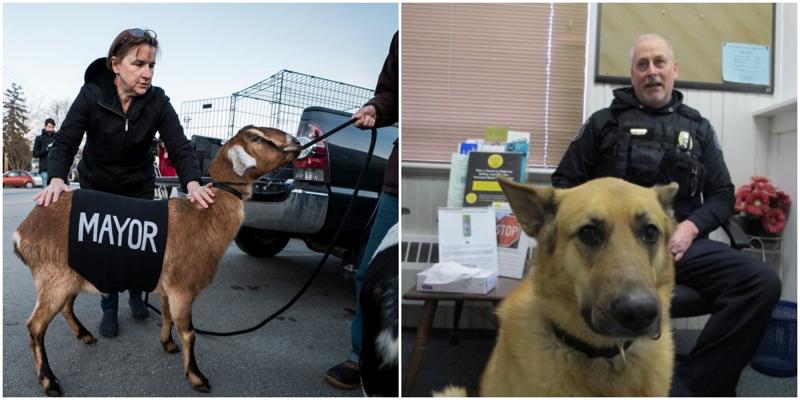 В платных выборах за пост мэра борются собака и козёл