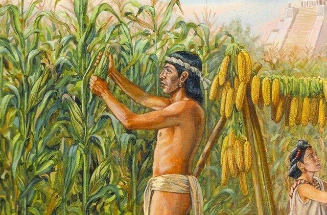 Кукуруза: зарождение американской цивилизации