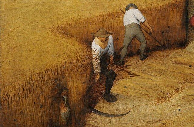Пшеница: зарождение европейской цивилизации