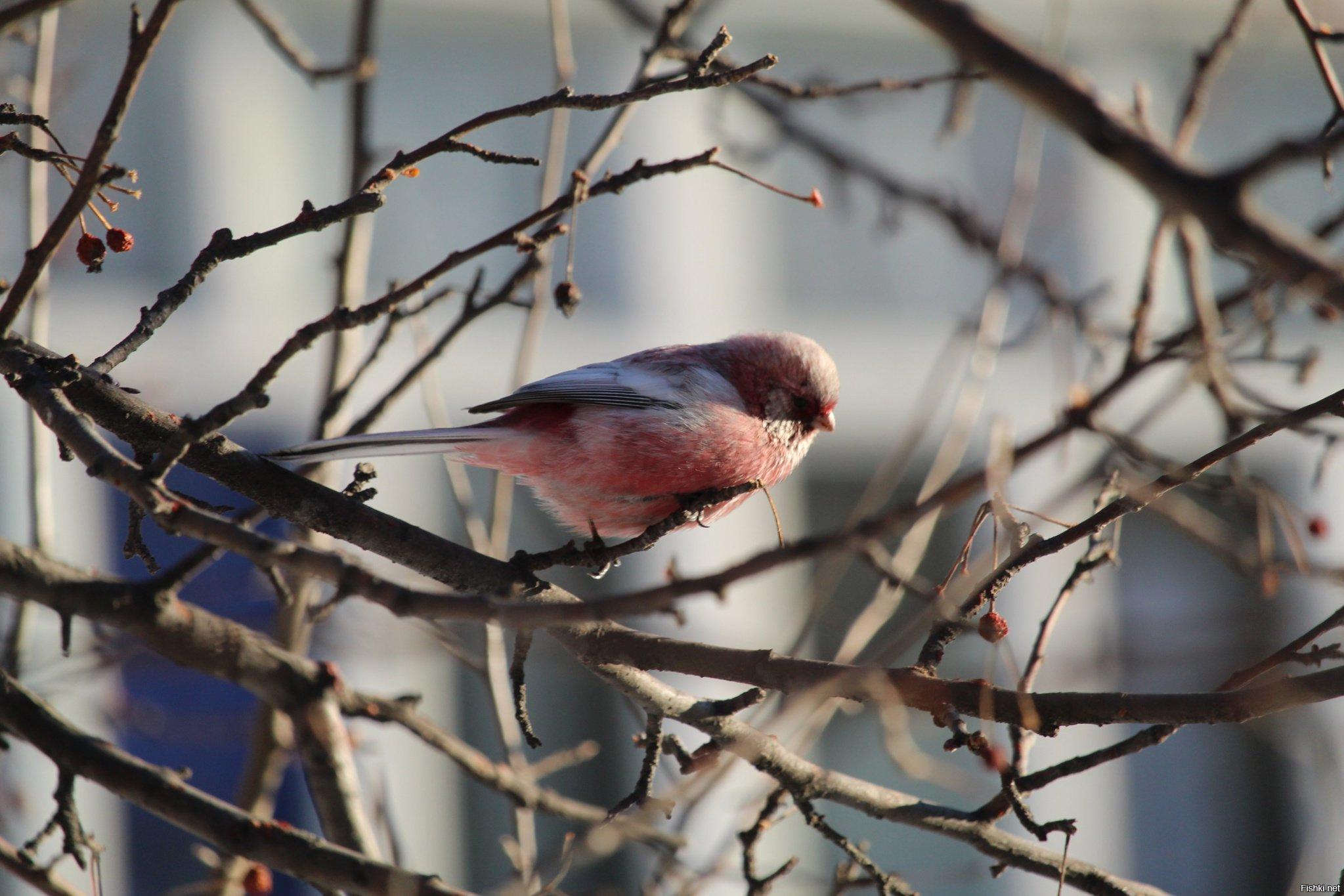 русалка как узнать породу птицы по фотографии располженные вненадельной земле