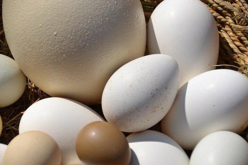 Что дают большие яйца
