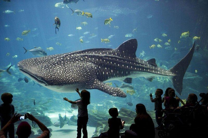 Подводный мир тарханкут крым фото исполнена