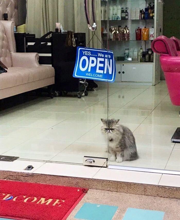 картинки кошки в магазине данный