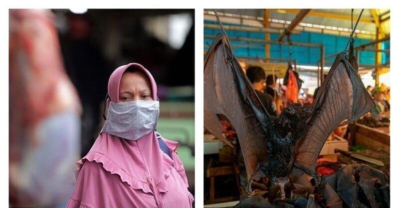 Шок: рынки с диким мясом продолжают работать, несмотря на эпидемию