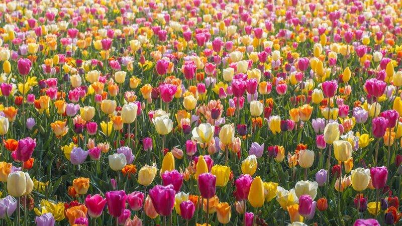 Разноцветие