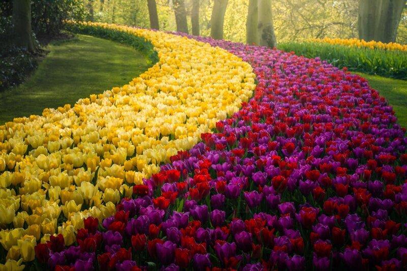 Яркие краски и великолепие