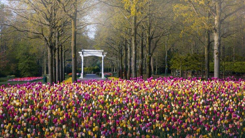 Самый красивый в мире парк тюльпанов пустует впервые за 70 лет