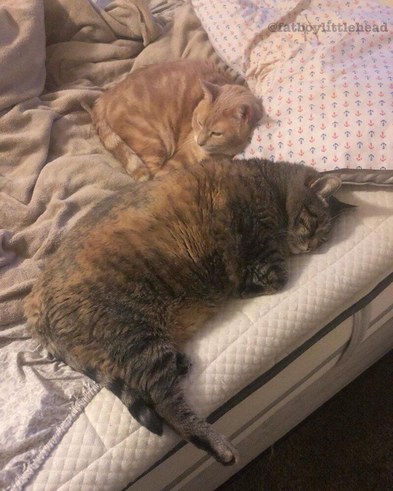 Кот Мало Есть И Похудел. Почему кот перестал есть: причины, что делать, если отказывается от еды