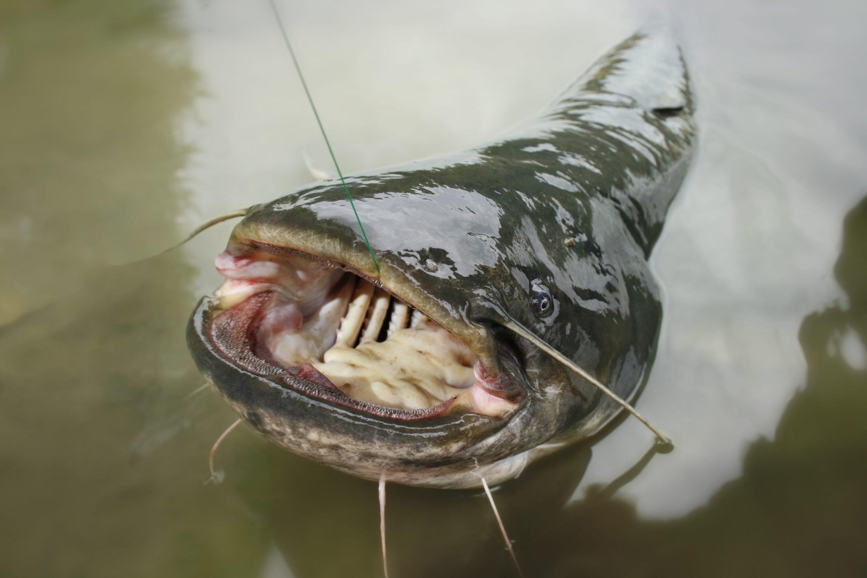 фото о рыбалке сомы окрашивание омбре