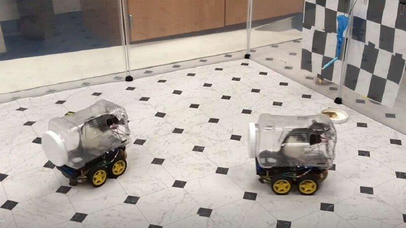 Ученые научили крыс водить машины