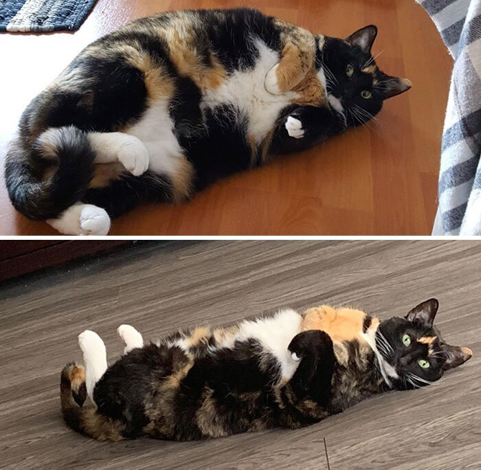 Кот похудел в зиму от чего