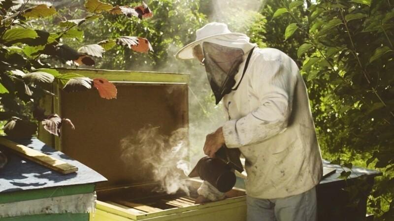 Почему дым«успокаивает» пчел?