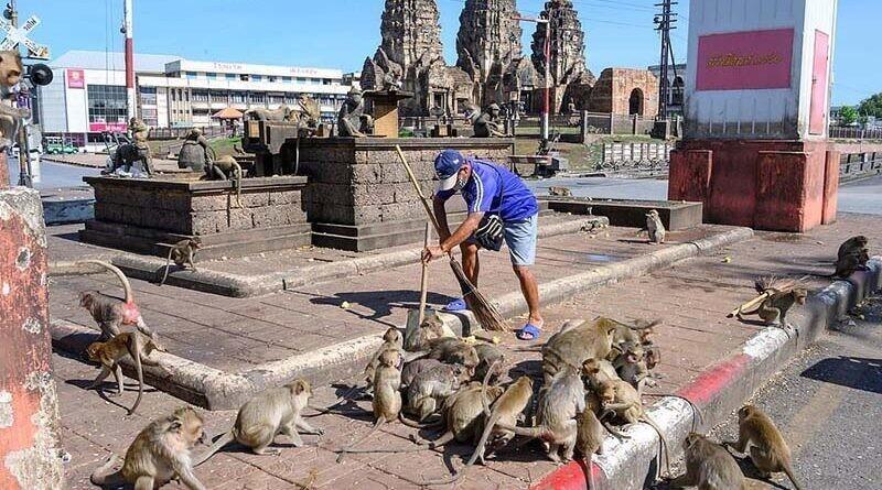 Планета обезьян: люди пытаются вернуть утраченный тайский город