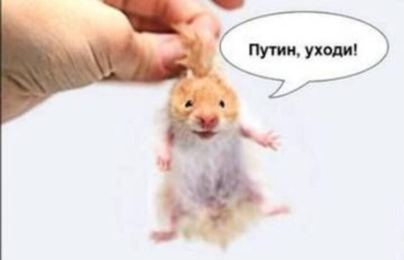 https://cdn.fishki.net/upload/post/2020/07/02/3359524/tn/cgroz8xgyzm.jpg