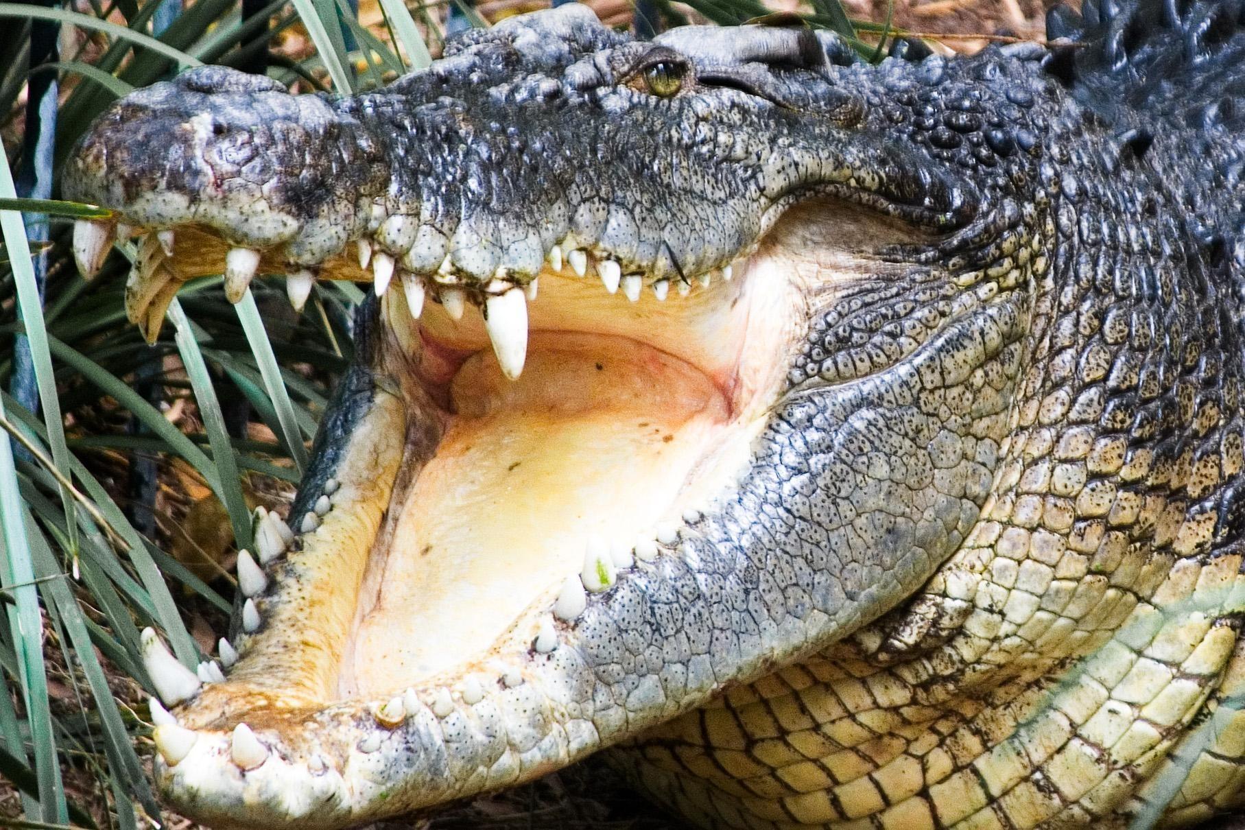 15удивительных особенностей животных, которые могут поразить по-настоящему