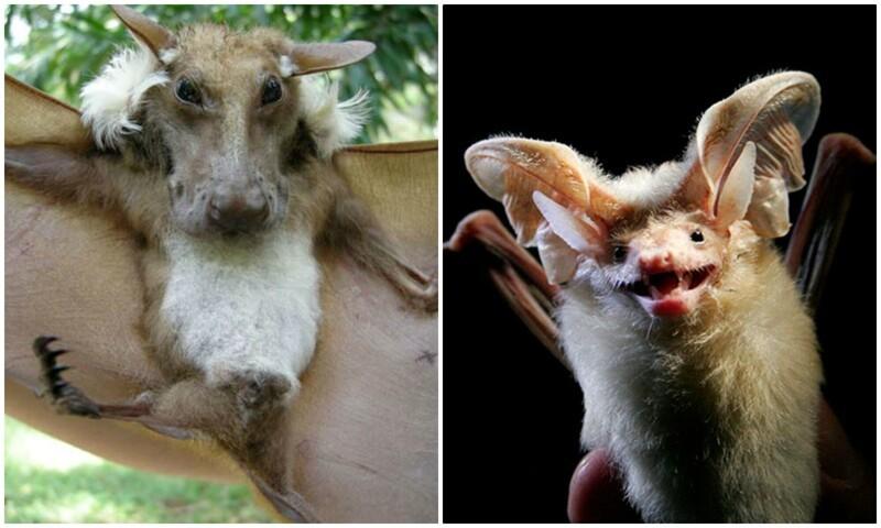 30 редких летучих мышей, о существовании которых вы наверняка не знали