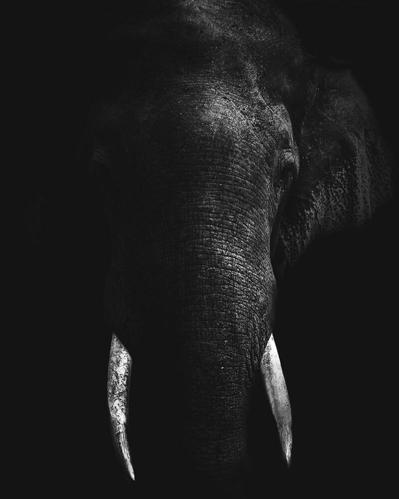 Слон в темноте. @tomdewaart
