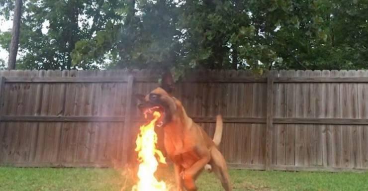 Огнедышащий пёс
