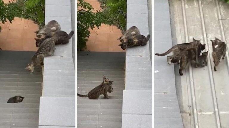Три кошки помогли забраться котенку на крышу дома